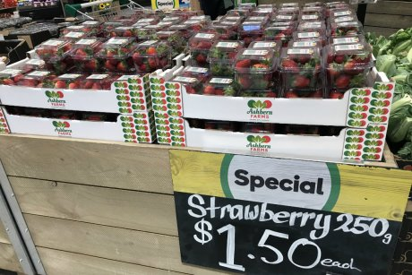 Strawberry grower's despair over mass dumping of fruit amid demand for extra large sizes