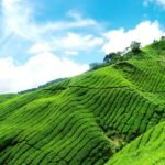 A rather hilly area, Munnar is suffused with