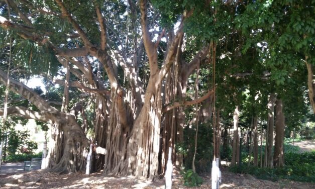 The Banyan Tree: The Lord of the Forest