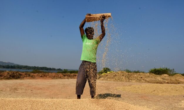 The New Rice War: China Eats Into Big African Markets Secured By India